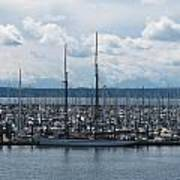 Sailboats In Seattle Poster