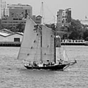 Sailing Free In Black And White Poster