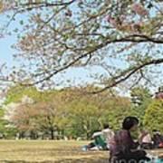 Sakura Time Poster
