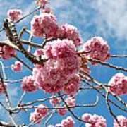 Sakura Tree Blossoms Poster