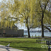 Salem Willow Trees Poster