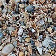 Sallie's Sea Shells Poster
