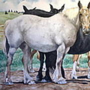 Sally's Horses Poster
