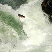 Salmon Run 5 Poster by Mamie Gunning