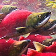 Salmon Run - Painterly Poster