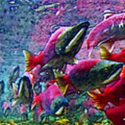 Salmon Run - Square - 2013-0103 Poster