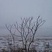 Salt Marsh Submerged In Fog Poster