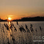 Salt Marsh Sunset Poster