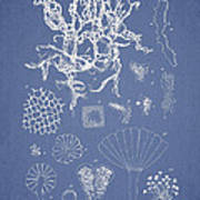 Salwater Algae Poster