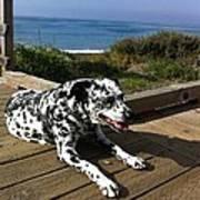 Samdog At The Beach Poster