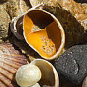 Sand Covered Shells Poster by Eugene Bergeron