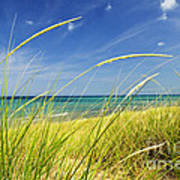 Sand Dunes At Beach Poster