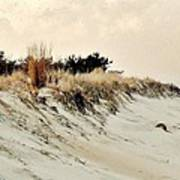 Sand Dunes At Penny Beach Poster
