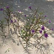 Sand Flower Poster