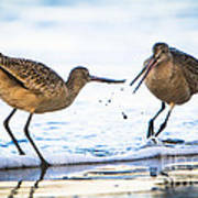 Sanderlings Playing At The Beach Poster