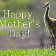 Sandhill Chick Mother's Day Card Poster