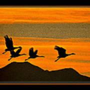 Sandhill Crane At Sunset Poster