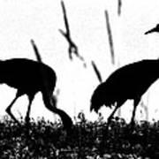 Sandhill Cranes In Silhouette Poster
