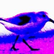 Sandpiper Abstract Poster