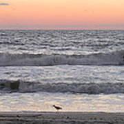 Sandpiper At Sunrise Poster