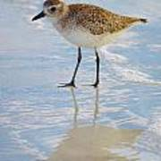 Sandpiper Reflection Poster