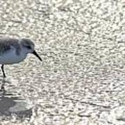 Sandpiper Reflections II Poster