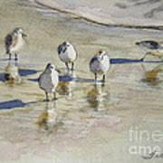 Sandpipers 2 Watercolor 5-13-12 Julianne Felton Poster