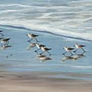 Sandpipers Poster