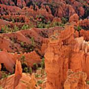 Sandstone Hoodoos At Sunrise Bryce Canyon National Park Utah Poster