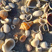 Sanibel Island Shells 2 Poster