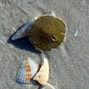 Sanibel Sand Dollar 1 Poster