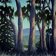 Santa Barbara Eucalyptus Grove Poster