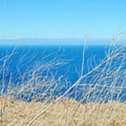Santa Cruz Island Sea Of Grass Poster