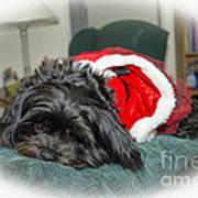 Santa Dog Poster