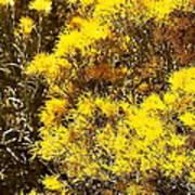 Santa Fe Yellow Poster
