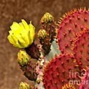 Santa Rita Cactus Poster