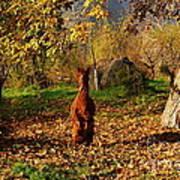 Sassy Alpaca Poster by Susan Hernandez