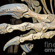 Saurophaganax Dinosaur Claw Fossil Poster