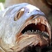 Fanged Fish Say Ahhhhhh Poster