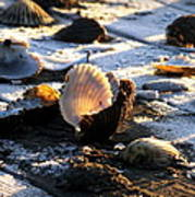 Half Shell On Ice Poster