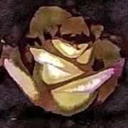 Scanned Rose Water Color Digital Photogram Poster