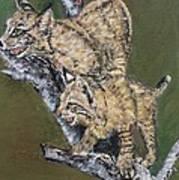 Scaredy Bobcats Poster