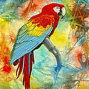 Scarlet Macaw In Abstract Poster