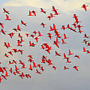 Scarlet Sky Poster