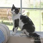 Scarlow Sitting In The Window Poster