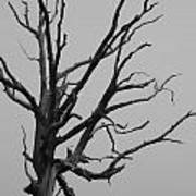 Scary Tree IIi Poster