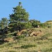 Scenic Hillside Poster