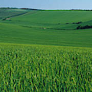 Scenic View Of A Field, South Downs Poster