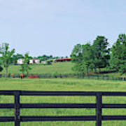 Scenic View Of Horse Farm, Woodford Poster