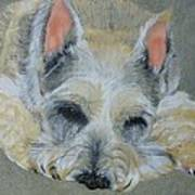 Schnauzer Pet Portrait Original Oil Painting 8x10 Inches Made To Order Poster